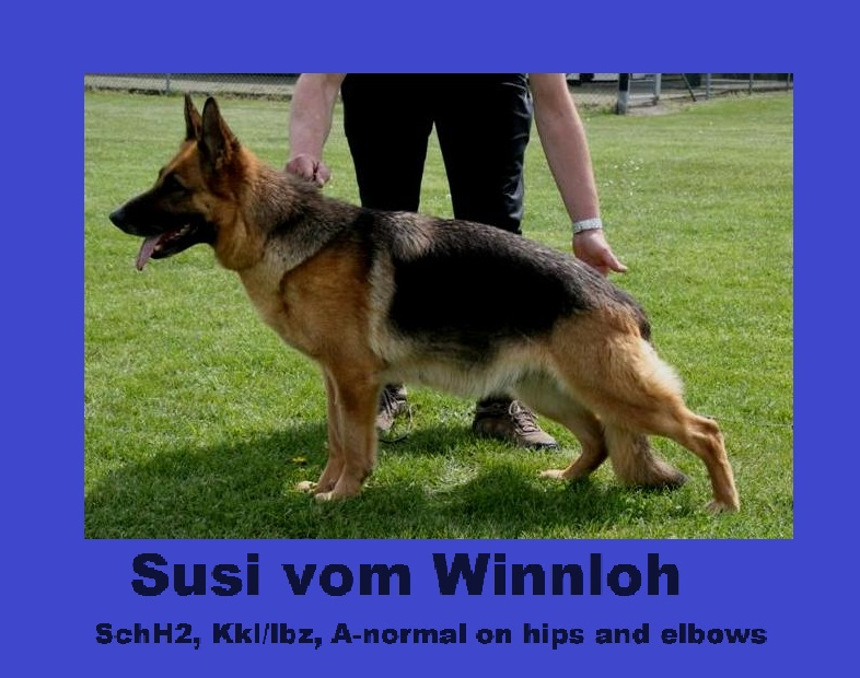 Susi vom Winnloh (Medium) 2b