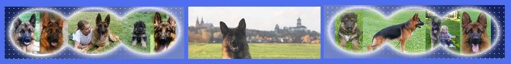 """""""von Haus Pfalzerheide"""" German Shepherd Dogs"""